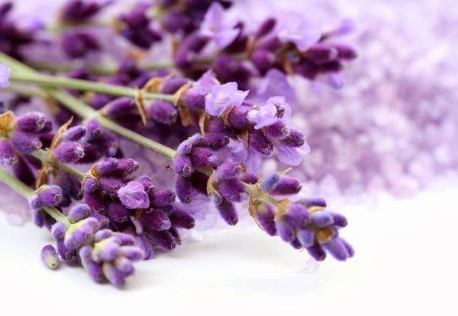 http://deepdeed.blogspot.it/2014/02/olio-essenziale-di-lavanda.html#more