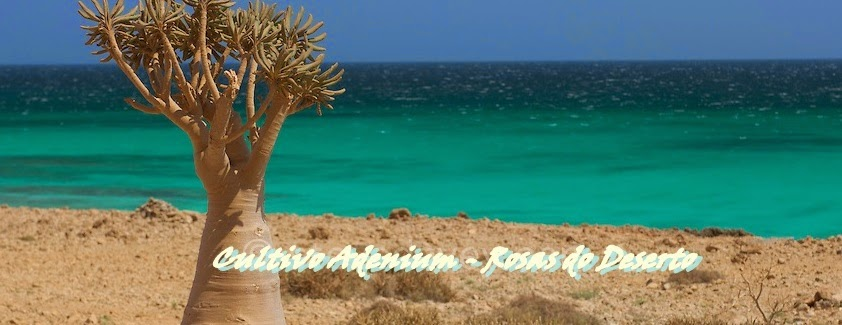 Cultivo Adenium - Rosas do Deserto