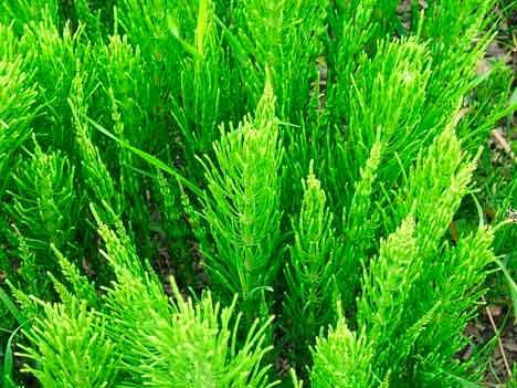 Plantas saludables adelgazar