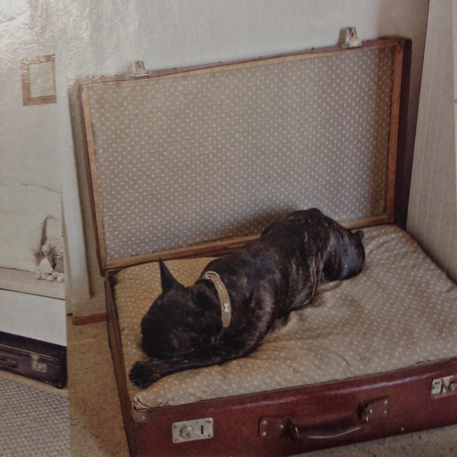 DIY, dogbed, hundsäng, koiranpeti, matkalaukku, kappsäck, suitcase