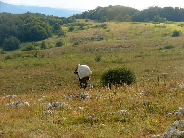 Собиратель трав