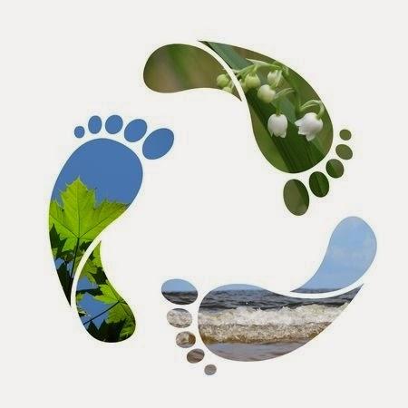 Huella de Carbono CO2 - FÉNIX DIRECTO Blog