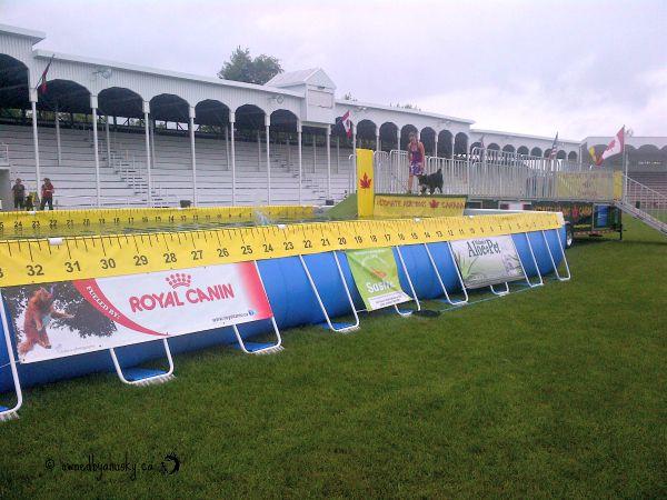 k9 sport fest air dogs