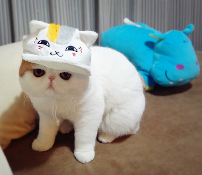 Foto-foto kucing paling imut bernama Snoopy