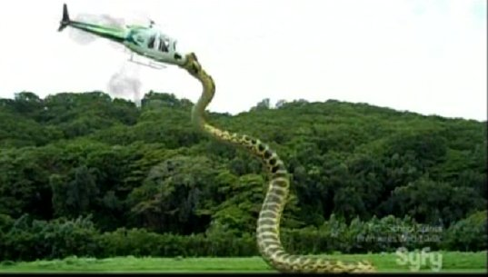 snake attacking chopper