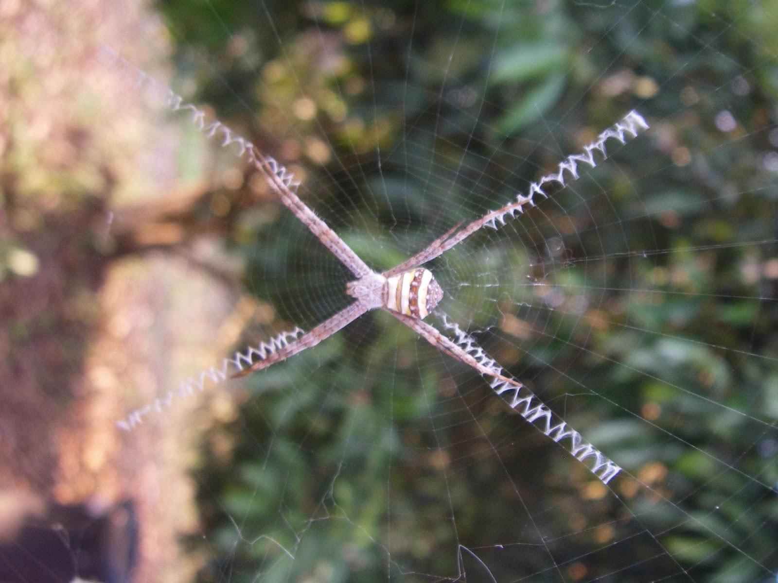 Au fil des araign es - Une araignee dans la salle de bain ...