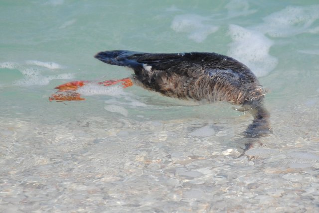 Field notes and photos april 2012 for Boca grande fishing