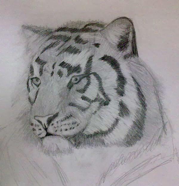 tigre dibujado con grafito