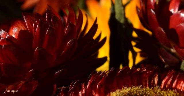 Rojo 8