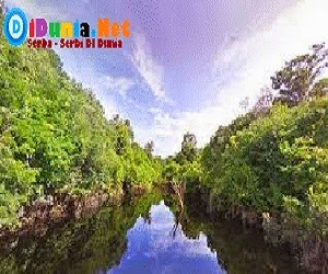 Sungai Rio Negro