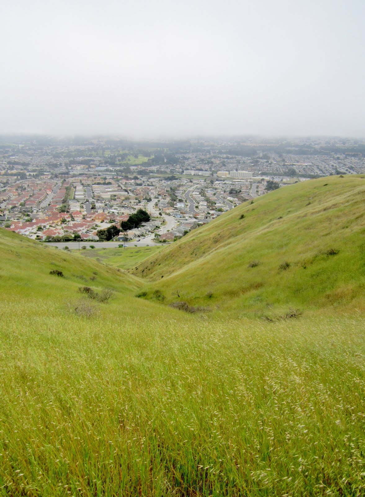 A Land That Time Forgot: San Bruno Mountain