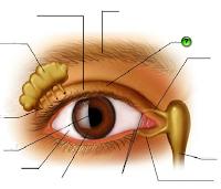 e-Learning Anatomi Mata Dalam Panca Indera