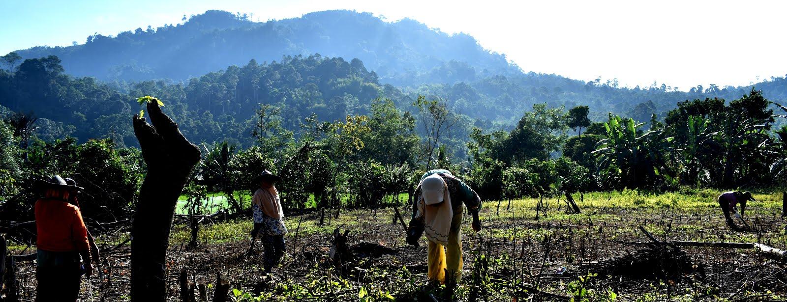 WALHI Bengkulu: Gerakan Penyelamatan Sumber-Sumber Kehidupan