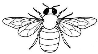 Honey Bee Clip Art :: Line Drawing :: Outline