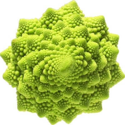 fractal Romanesco cauliflower