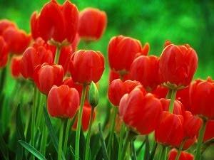 Ele me trouxe um canteiro de tulipas vermelhas pendurado em seu sorriso...