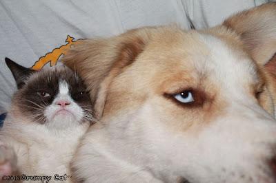 Foto-foto Grumpy cat 04