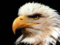 A ÁGUIA ENXERGA O QUE OS HUMANOS NÃO CONSEGUEM  ENXERGAR.