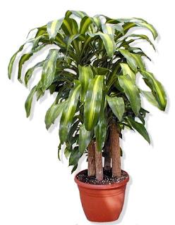 Le piante pi adatte contro l 39 inquinamento domestico - Piante da appartamento resistenti e decorative ...