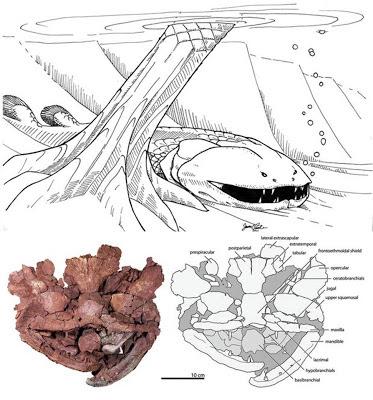 Laccognathus