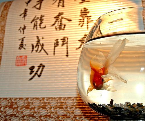 Peces en casa mala suerte o buena for Feng shui para la buena suerte