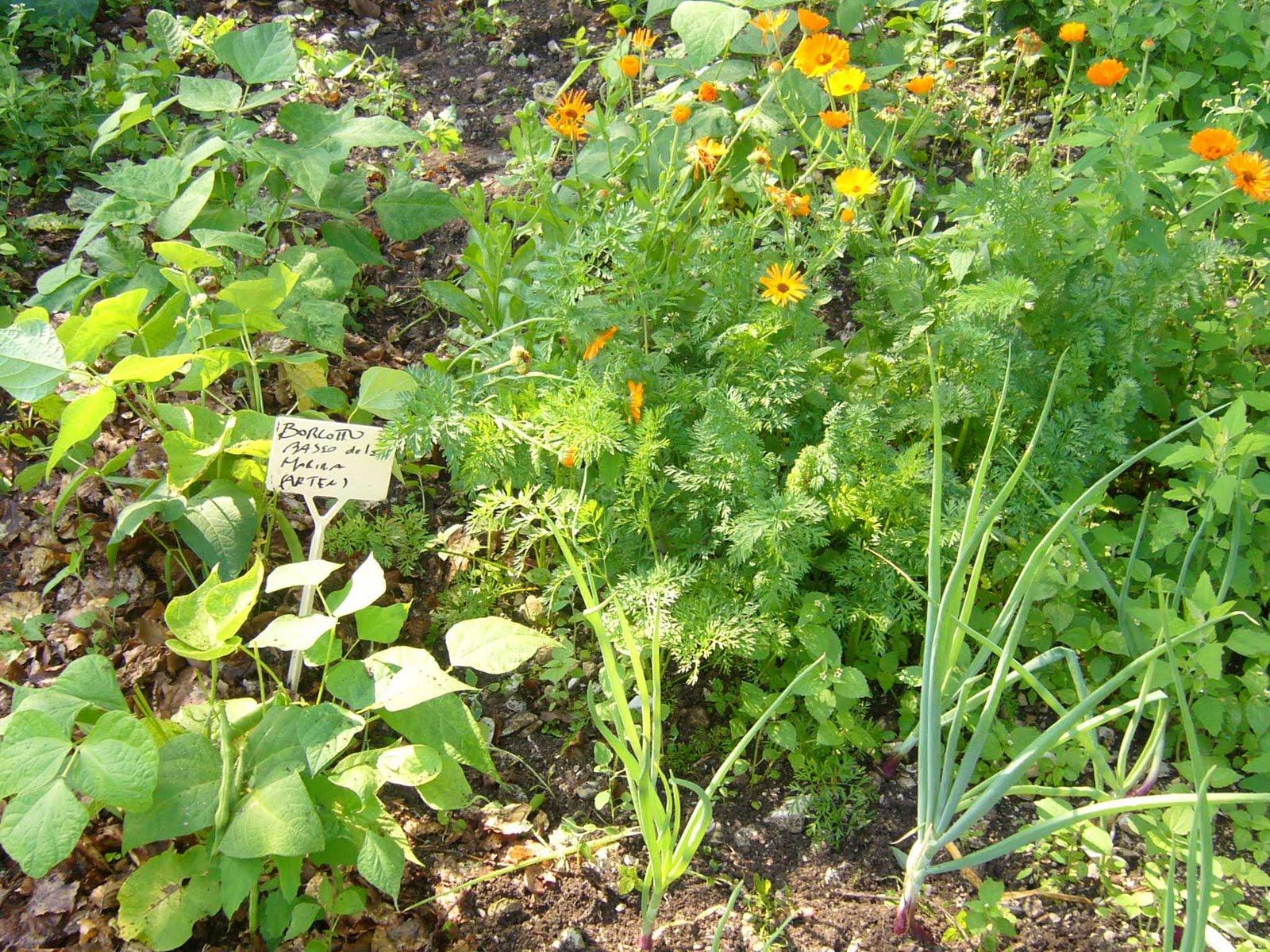Gruppo coltivare condividendo luglio 2011 for Coltivare cipolle