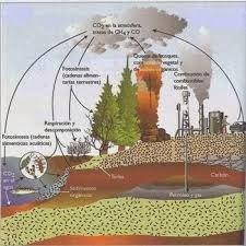 Resultado de imagen de formación de combustibles fósiles