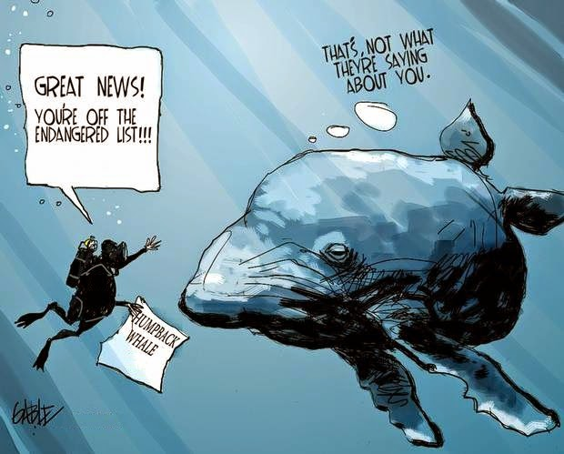 Brian Gable: Humpback Whale extinction.