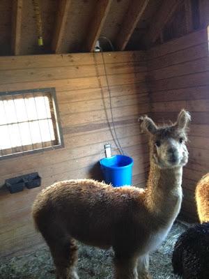 Life As A Healthcare Cio Building Unity Farm Preparing For Winter