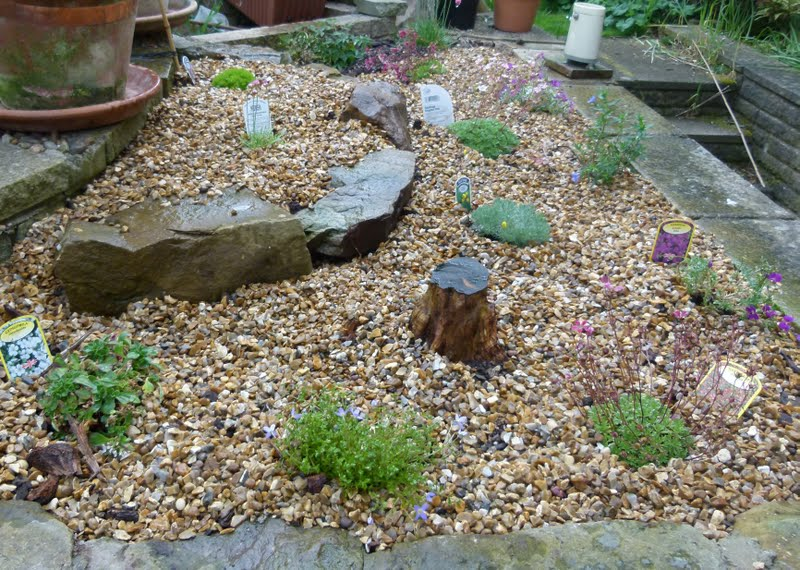 Our Plot At Green Lane Allotments Pebble Garden