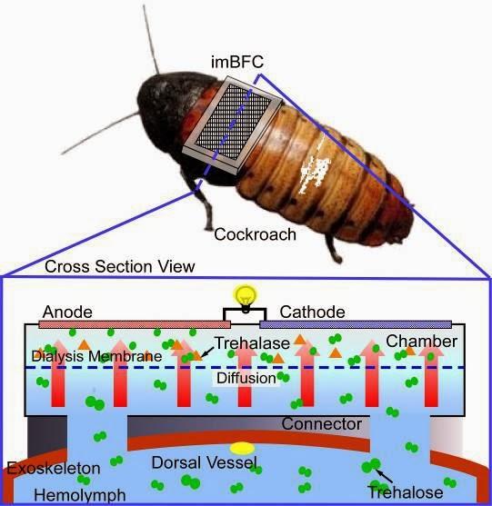 cyborg-cockroach