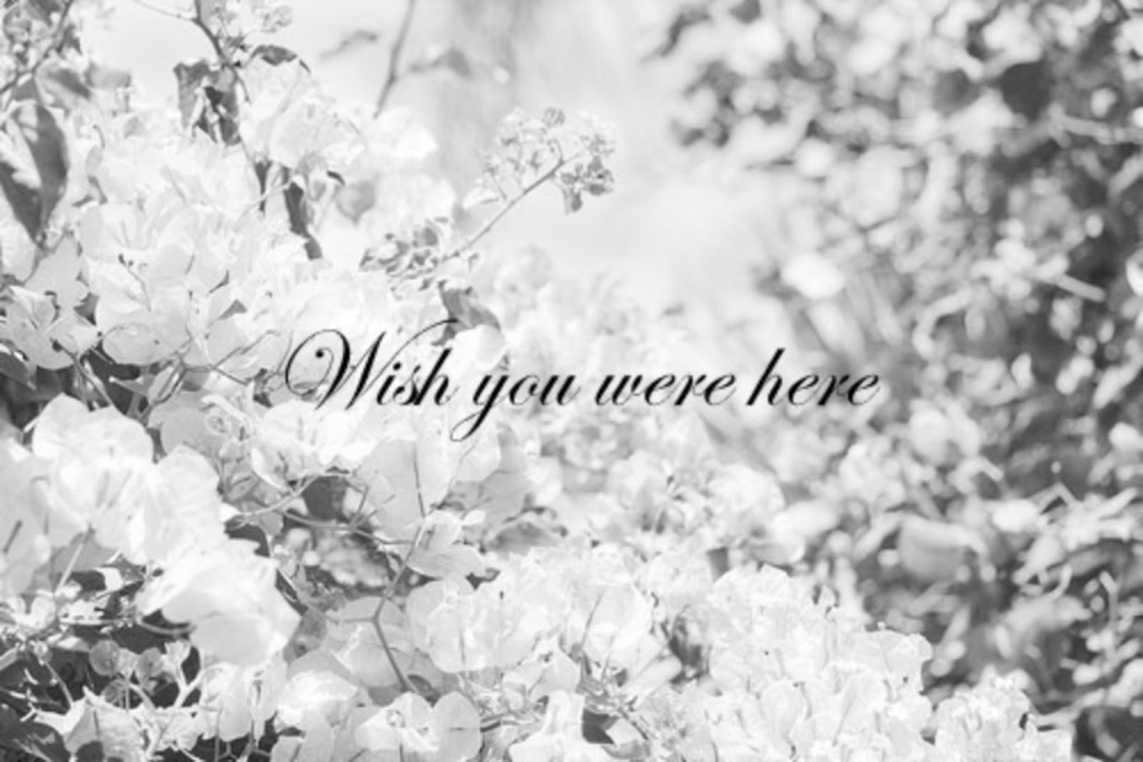 ! Wish you were here