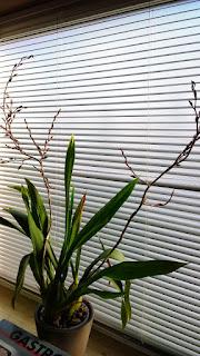 Winterblühende Orchidee (c) by Joachim Wenk