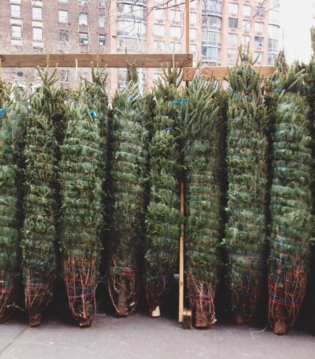 nyc christmas trees