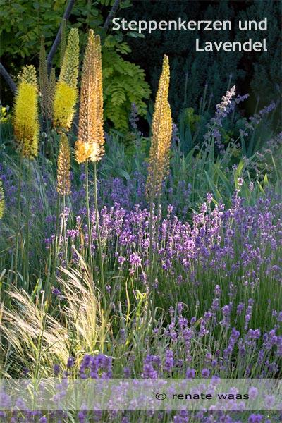 Blumenbeet mit Lavendel - Bepflanzung Gartenbeete