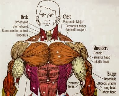 Pec Workouts