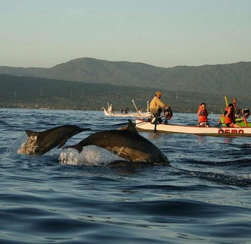 Dolphins In Lovina