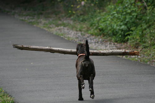 big sticks are great for workouts