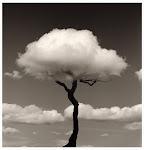 El TAO, Infinito movimiento, vuelve siempre a su origen, como de la flor se vuelve a la raíz.