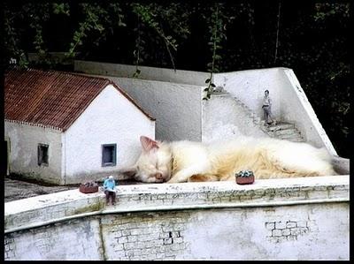 Kucing Raksasa Yang Menakutkan 9 Segel