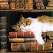 in de boekenkast
