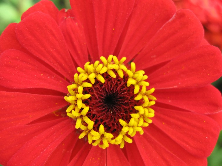 Beautiful Red Flowers Wallpapers - Latest News