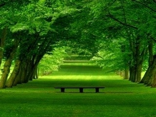These Are The Discoveries Of Late Greenery Don T End