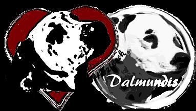 VDH/FCI-Dalmatinerzucht