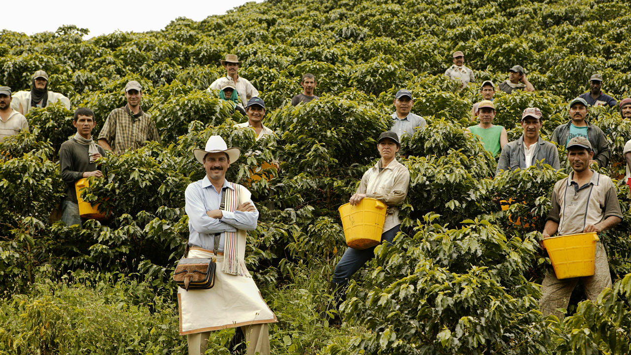 Best Colombian Coffee In Usa