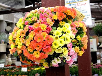 Craft爺さんのブログ: 春の花を仕入れに Craft爺さんのブログ...  春の花を仕入れに