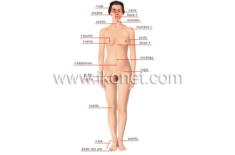 Cuerpo humano for El interior del cuerpo humano