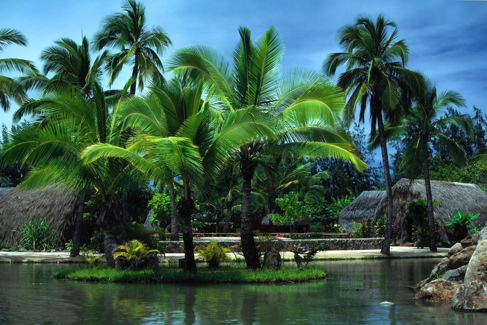 Beautiful Wallpapers for Desktop: Palm tree wallpapers hd