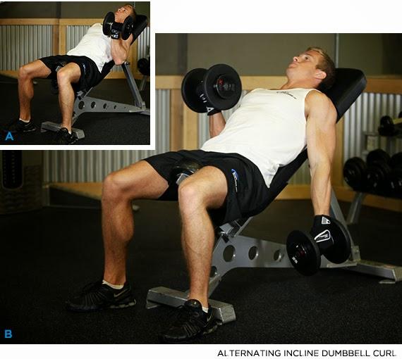 biceps intérieur exercices