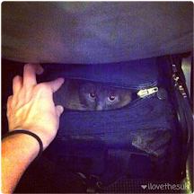 Flying With A Cat as a Carry On